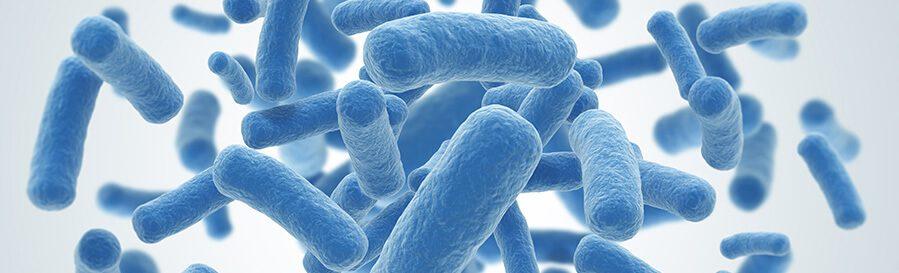 Cómo elegir un probiótico