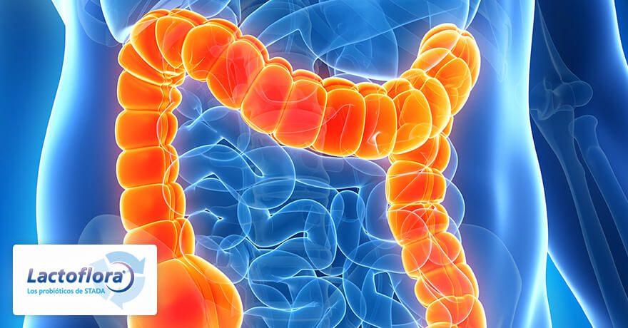 colitis ulcerosa y probioticos