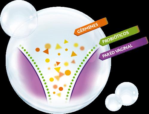 probioticos flora vaginal